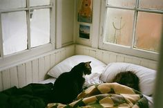 Image about photography in relax by gillian on We Heart It Crazy Cat Lady, Crazy Cats, Jolie Photo, Coven, I Love Cats, Cats And Kittens, Dog Cat, Cute Animals, Sleep