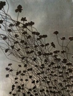 Jo Hannah. Gate 5. Poppies at the Tower Gate. Encaustic image transfer.
