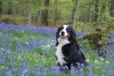 10 Dog breeds that make the perfect hiking partner