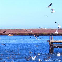 Abundance of birds frolicking at the Bergrivier, Laaiplek West Coast, Abundance, Cape, Birds, Animals, Mantle, Cabo, Animales, Animaux
