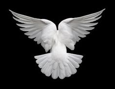 dove flying (aquarius)