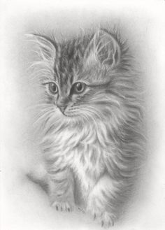 Zeichnung von Henri Deregnaucourt - My CMS Cat And Dog Drawing, Kitten Drawing, Cute Cat Drawing, Cute Animal Drawings, Pencil Art Drawings, Realistic Drawings, Art Drawings Sketches, Drawing Ideas, Cat Tattoo Designs