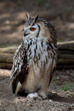 "captvinvanity: "" Owl | Photographer | CV """