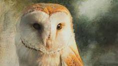 Afbeeldingsresultaat voor paul christiaan bos