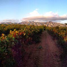 Wine fields @ Hostalets de Pierola with Montserrat in the background - Catalonia, Spain
