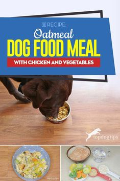 Homemade Oatmeal Dog Food Recipe with Chicken and Vegetables Dog Biscuit Recipes, Dog Treat Recipes, Healthy Dog Treats, Dog Food Recipes, Chicken Recipes, Cooking Recipes, Doggie Treats, Cake Recipes, Healthy Recipes