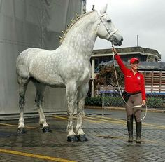 Big Percheron