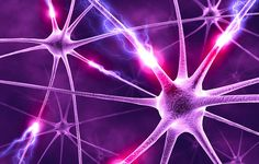 """Investigadores se unen y aplican """"crowdsourcing"""" al estudio del cerebro"""