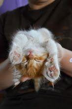 sleeping kitty cat #animals, #pets, #cute, #funny