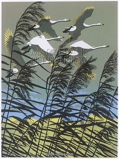 'Swans flying over the reeds' by Robert Gillmor.