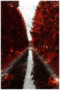 Red autumn, by Margo Moran