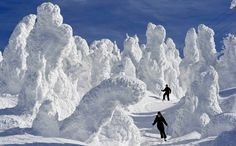 Niseko Japan, where snow-covered trees are known as 'juhyo' or ice monsters. Lewis: I know from experience that Japan gets lots of snow.