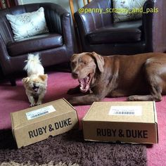 One of our many happy Ruby & Duke #Dukebox dog toy and treat customers @penny.scrappy.and.pals. www.rubyandduke.com  #dogsofinstagram #dogstagram #dogs #dogsrule #doglove #doglovers #doglife #dogoftheday #doggy #doglover #doggie #dogscorner #dogofinstagram #dogsofinsta #dogwalk #dog_features #doggies #dogsandpals #dogloversofinstagram #dogdays #dogsofinstaworld #dogcrushdaily #dogslover