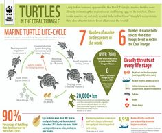Deadly threats at every stage of a turtle's life. http://infographic.st/marine-turtle-facts