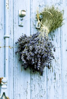 "Wow, this site is awesome-love the natural flowers  Dried Fragrant Premium French Lavender Bundles $9 each   ~Bundle is 20.5"" tall x 5.5"" wide. Individual stalks range from 12.5"" to 20.5"" long.  No pesticides, hand gathered, air Beautiful dried and very fragrant French Lavender stalks filled with blue lavender flowers. 120+ stemsried."