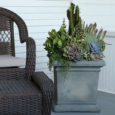 Succulent Arrangement Succulent Arrangements, Succulents, Iron Shelf, Bird Cages, Hanging Baskets, Frames On Wall, Planters, Gardens, Display