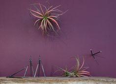 thigmotrope-satellite-flora-grubb-gardens-2.jpg 700×511 píxeles