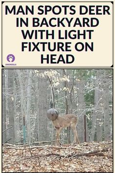 Animals And Pets, Baby Animals, Whitetail Bucks, Deer, Life Hacks, Channel, Funny, Animals, Pets