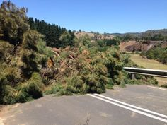 A major hazard after bushfires is falling trees and limbs. Here's one blocking a road in Cudlee Creek in the Adelaide Hills. (ABC: Matthew Doran)
