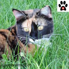 Do you know Splat the Cat ? Animals, Cat Breeds, Animales, Animaux, Animais, Animal