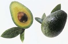 What to do when avocado tree has brown spots on the leaves.