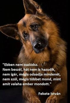 Dogs 🐶 - Cute Dogs, Dog cat and Doggies. Animals And Pets, Funny Animals, Cute Animals, Funny Dogs, Cute Dogs, Maila, Greek Quotes, Dog Memes, Dog Quotes