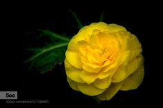 The Light Within by Merma1d. Please Like http://fb.me/go4photos and Follow @go4fotos Thank You. :-)