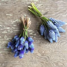 These mini muscari bundles are almost too sweet to handle Embroidery On Clothes, Embroidery Fashion, Brooches Handmade, Silver Beads, Wedding Flowers, Artsy, Bloom, Wreaths, Bridal