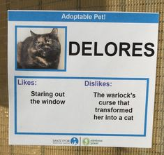 Homeless Cats Given Funny 'Likes and Dislikes' to Help Them Get Adopted at Local Animal Rescue Funny Cute Cats, Funny Cat Memes, Funny Cat Videos, Funny Cat Pictures, Hilarious, Funny Animals, Funniest Animals, Fun Funny, Animal Pictures