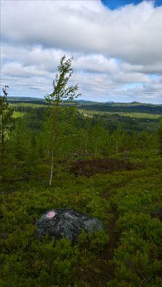 Hiking route by lake Kaltimo, Joensuu, Finland