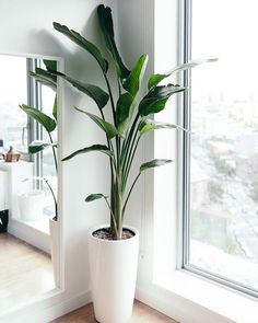 Plants always adds a refreshing accent on any home spaces - posted by Melquea Eustaquio https://www.instagram.com/melquearealestate - See more Luxury Real Estate photos from Local Realtors at https://LocalRealtors.com/stream