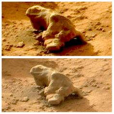 Iguana Found On Mars By NASA Curiosity Rover, 3 Photos, Video  Here is a photograph taken by the Mars Curiosity Rover of what appears to be a fossilized Iguana on the surface of Mars. This reptilian creature appears in a few photos on the SOL 153 page, reports UFO Hunting Clouds.