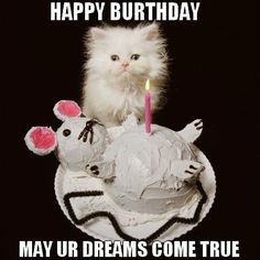 Happy Birthday Cat – Birthday Wishes, Images, Memes, Songs, And Greetings