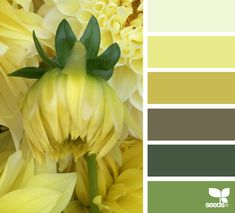 { dahlia yellow } image via: @designseeds