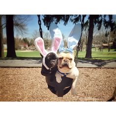 """""""Move over!""""... """"are you kidding me?"""", French Bulldogs in Bunny Costumes, sharing a swing, Happy Easter!"""