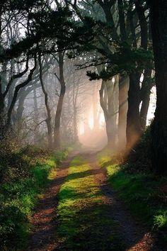 Godolphin Woods, Cornwall
