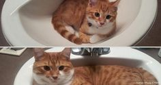 Adorable pictures of animals growing up! | From 98gag