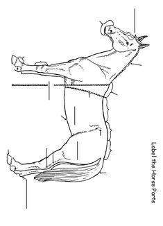 Label the Horse Worksheet - Homeschool Helper