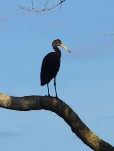 pantanal botanical - Google 検索