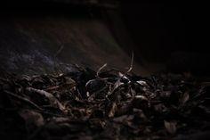 fallen leafs, fallen leafs, on the ground