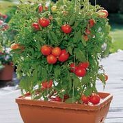 Container gardens are perfect for beginning growers and renters who don't want to dig up their plants every time they move. There are several very good potting mixes and soils available for purchase at any garden center. If you want to mix your own though, go for it! Just keep in mind that this will require a little extra work and probably a trip...