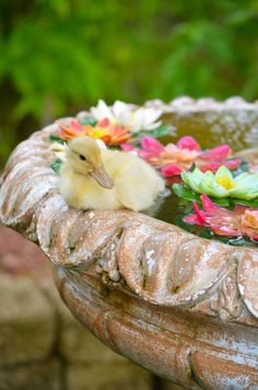 Someone put a duckling in the bird bath...
