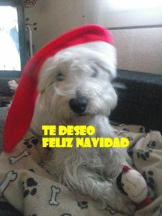 Thor. #FelizNavidad #clientes #fotos http://www.petclic.es/las-mascotas/imagenes-tus-animales-7