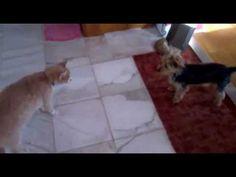 Öcsi,a gyilkos macska ( Buddy, the killer cat )