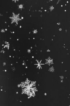 The Year in Pictures: A Winter's Tale I Love Snow, I Love Winter, Winter Snow, Winter Christmas, Black Christmas, Winter Photography, Art Photography, Snowflake Photography, Oc Pokemon