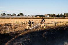 Fire breaks out in fields close to River Roche in Essex