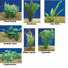 214 best tropical aquarium plants images fish tanks aquarium