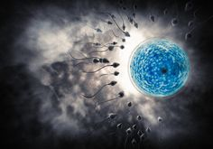 The underlying cause of male infertility is unknown for 30 percent of cases. In a pair of new studies, researchers have determined that the reproductive homeobox (RHOX) family of transcription factors -- regulatory proteins that activate some genes and inactivate others -- drive the development of stem cells in the testes in mice. The investigators also linked RHOX gene mutations to male infertility in humans.