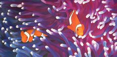 "Oil painting titled ""Clown Fish"", done on an 18"" x 36"" x 1.5"" canvas. SOLD"