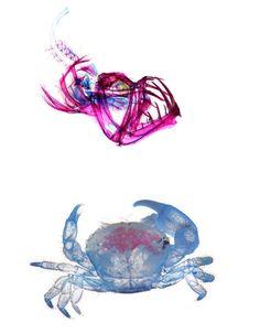 new-world-transparent-creatures-4